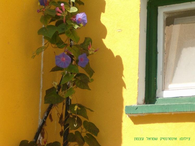 בית הארחה בקיבוץ בעוטף עזה - צבעים חמים